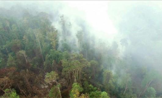 Indonezja - Największa katastrofa ekologiczna od 15 lat, ogień spala lasy na długości 5 tysięcy kilometrów -4