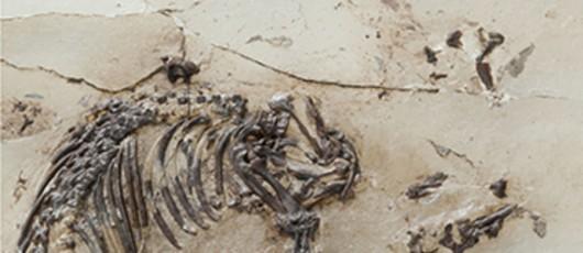 Resztki prehistorycznego dziwoląga /CNRS/