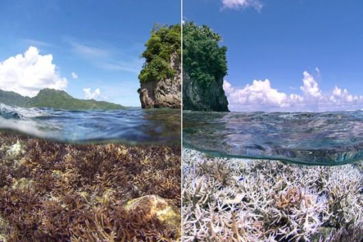 XL-Catlin-Seaview-Survey-American-Samoa_610_0