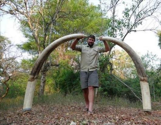 Zimbabwe - Myśliwy z Niemiec zastrzelił największego słonia, jakiego widziano w tym kraju od 30 lat -2