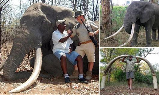 Zimbabwe - Myśliwy z Niemiec zastrzelił największego słonia, jakiego widziano w tym kraju od 30 lat -3