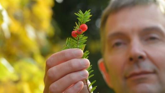 Fortingall, Szkocja - Jedno z najstarszych drzew w Europie zmieniło płeć po 3 tysiącach lat -3