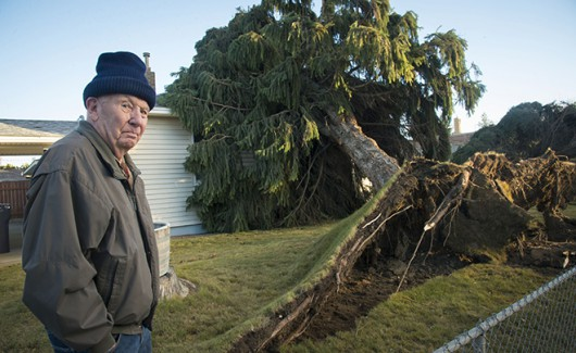 Jay Bly checks out the damage to his home in Spokane, Wash., Wednesday, Nov. 18, 2015, after a Norway spruce fell on his house the day before. Cleanup began Wednesday in Washington state after a powerful storm killed three people, cut power to more than 350,000 residents and flooded rivers.  (Colin Mulvany/The Spokesman-Review via AP) COEUR D'ALENE PRESS OUT; MANDATORY CREDIT