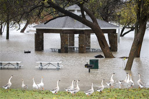 Geese walks along the edge of rising floodwater in Towne Lake Park on Friday, Nov. 27, 2015, in McKinney, Texas. Most of the Dallas-Fort Worth area is under a flash flood watch or warning Friday, with rain expected to continue throughout the day. (Smiley N. Pool/The Dallas Morning News via AP) MANDATORY CREDIT; MAGS OUT; TV OUT; INTERNET USE BY AP MEMBERS ONLY; NO SALES