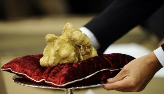 white-truffle-auction