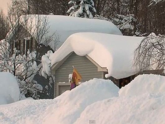 Buffalo brak śniegu.6JPG