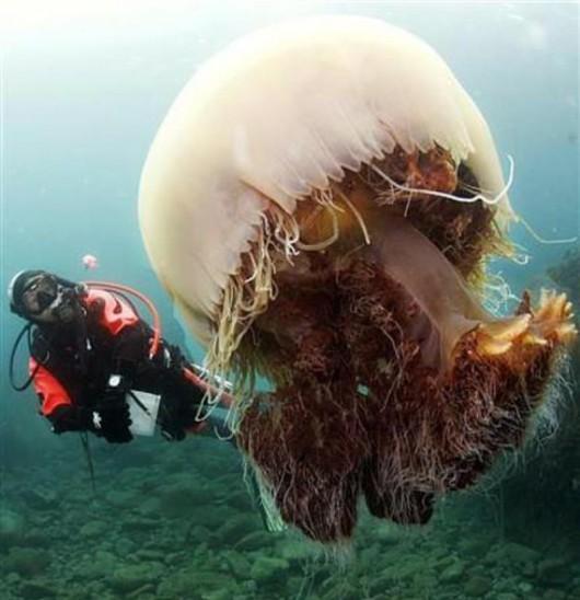 Meduza Nomura