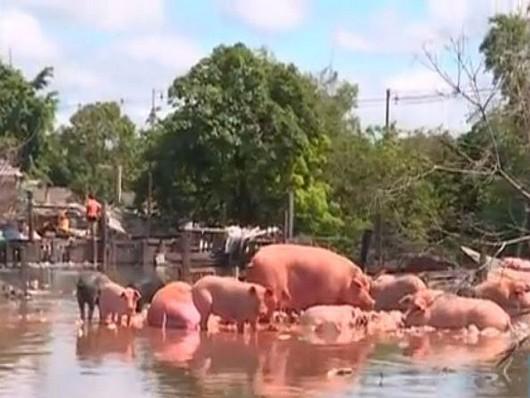 Powódź Argentyna. Santa FeJPG