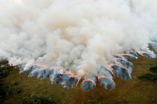 Australia - Ogromny pożar w Tasmanii, płoną drzewa mające ponad 1000 lat