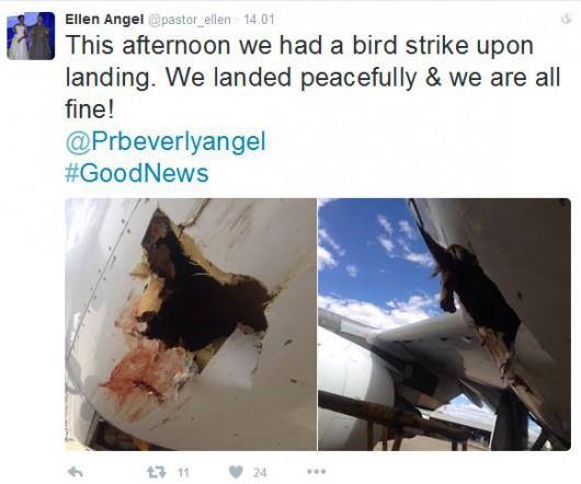 Kolizja samolotu z ptakiem