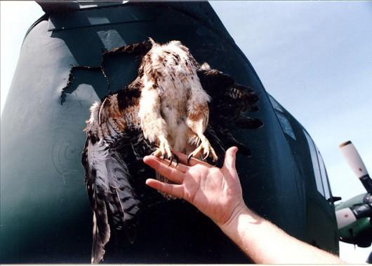 U szkodzenia po spotkaniu z ptakiem