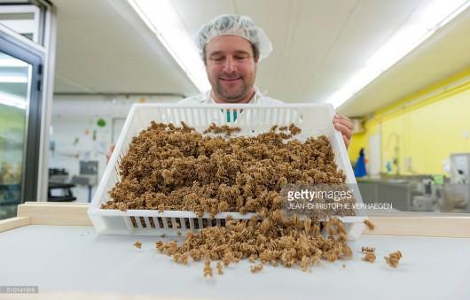 Francja - Makaron ze świerszczy i szarańczy staje się przysmakiem w Lotaryngii
