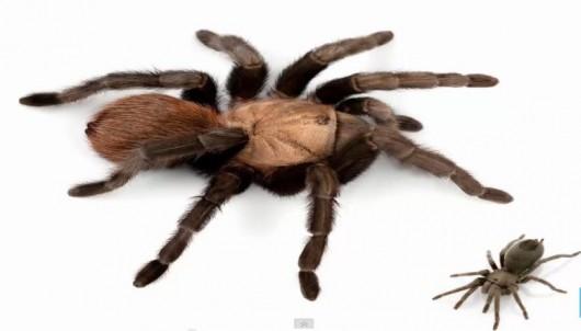 Nowo odkryty gatunek pająka