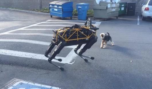 Robot Darpa i pies