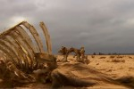 El NIno przyczyną suszy i głodu na świecie Foto: YT