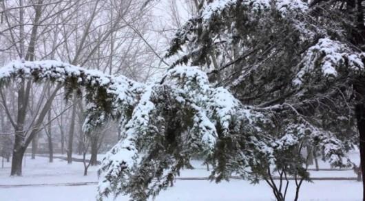 W Tunezji, Maroku, Algierii i Hiszpanii spadł śnieg -5