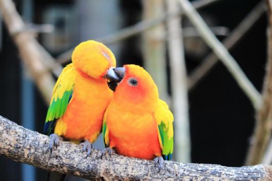 W miłości świat nabiera barw