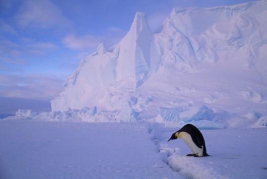 Antarktyda - Bardzo szybko rozpada się lodowiec szelfowy Nansena -2
