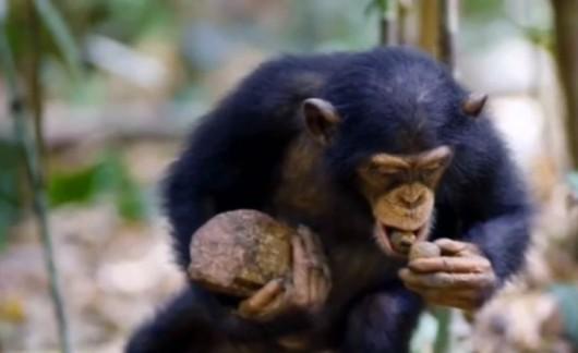Małpie rytuały