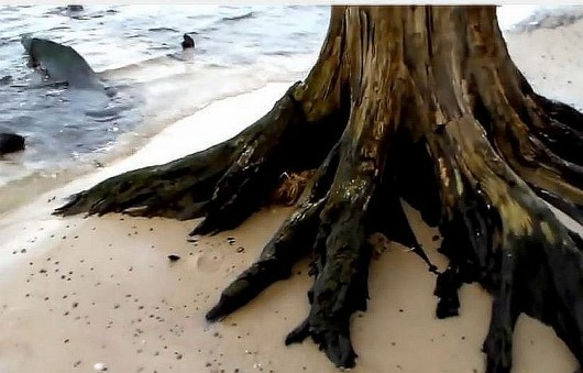 Martwy las na plaży 5