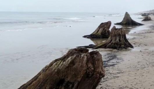 Martwy las na plaży