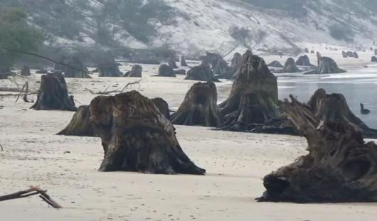 Martwy las na plaży Foto: Andrzej Demczak