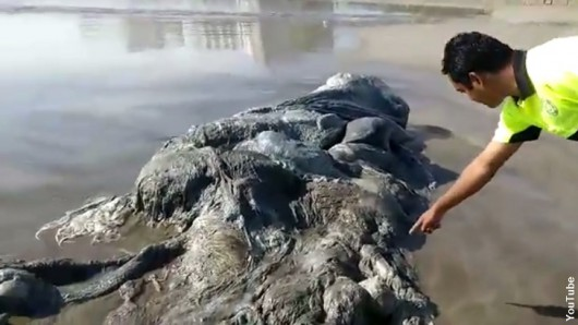 Meksyk - W Acapulco ocean wyrzucił na plażę czterometrowe stworzenie głębinowe -2