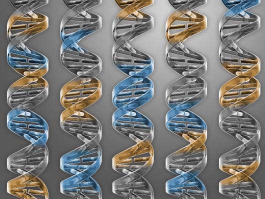 Naukowcy J. Craig Venter Institute w La Jolla zaprojektowali i wykonali minimalny genom bakterii