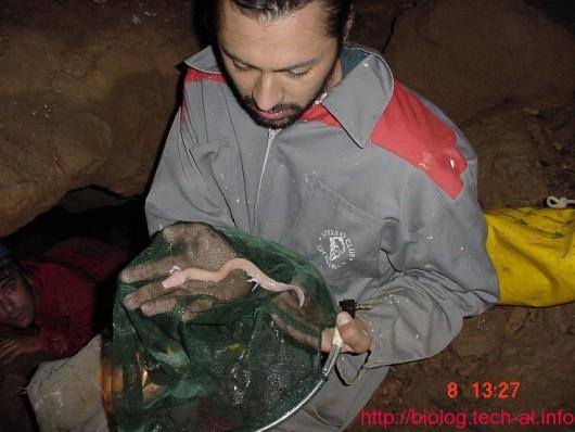 Odmieniec jaskiniowy -5
