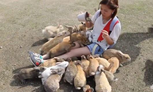 Okunoshima - wyspa opanowana przez króliki 4