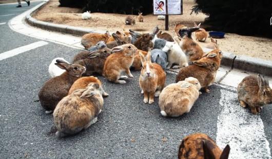 Okunoshima - wyspa opanowana przez króliki