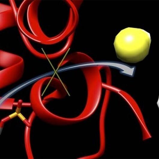 Schemat procesu blokowania aktywności enzymu CBS Matthew Beio, University of Nebraska-Lincoln materiały prasowe