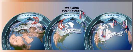 Wir polarny - WikiPedia.org