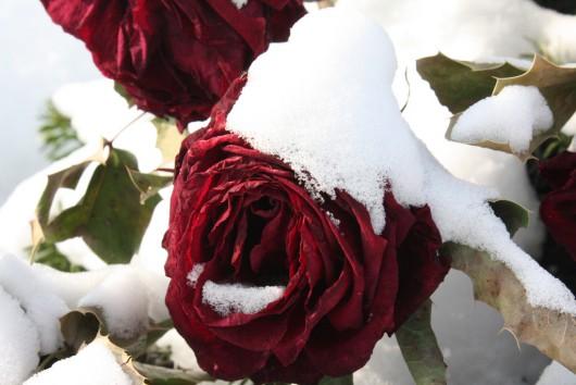 Austria - Ogromne straty w rolnictwie z powodu mrozów i obfitych opadów śniegu -10