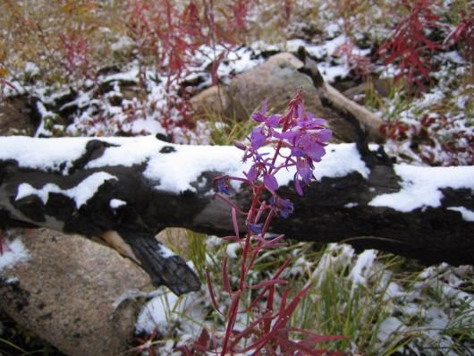 Austria - Ogromne straty w rolnictwie z powodu mrozów i obfitych opadów śniegu -14