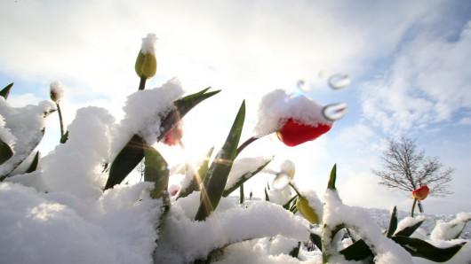 Austria - Ogromne straty w rolnictwie z powodu mrozów i obfitych opadów śniegu -9
