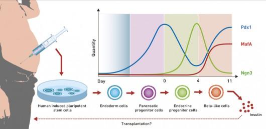Czynniki wzrostu istotne w procesie przemiany komórek macierzystych w komórki beta ETH/ Zurich