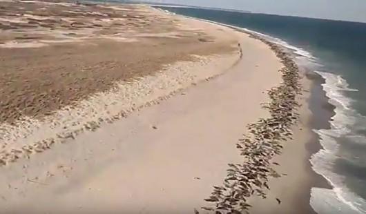 Foki na półwyspie Cape Cod