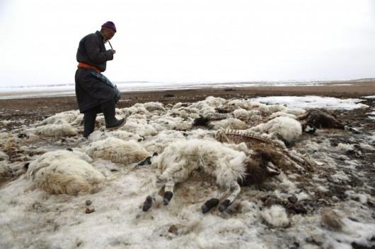 Mongolia - Anomalia pogodowa spowodowała mrozy do minus 40 st.C -1