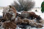 Mongolia - Anomalia pogodowa spowodowała mrozy do minus 40 st.C -2
