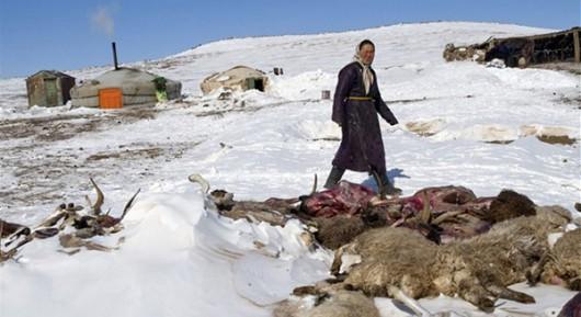 Mongolia - Anomalia pogodowa spowodowała mrozy do minus 40 st.C -3