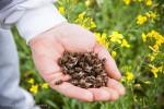 Naukowcy ustalili przyczynę pomoru pszczół