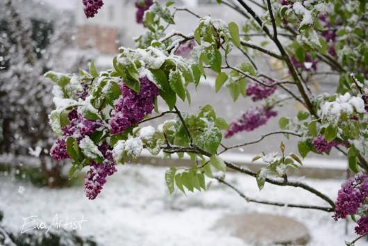 Ogromne śnieżyce w Austrii, dziesiątki tysięcy domów bez prądu -11