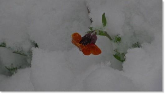Ogromne śnieżyce w Austrii, dziesiątki tysięcy domów bez prądu -12