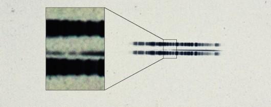 Płyta fotograficzna z zapisem widma gwiazdy van Maanena z 1917 roku The Carnegie Institution for Science materiały prasowe