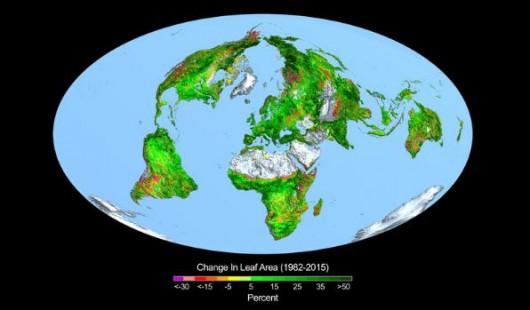 Przyrost zieleni na Ziemi w latach 1982-2015
