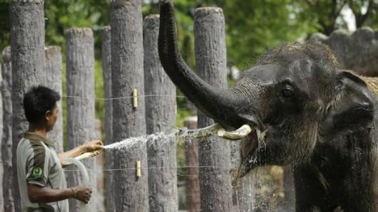 Tajlandia i Kambodża - Padły rekordy temperatur, jeszcze nigdy nie było takich upałów -2