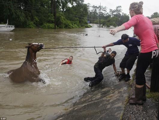 USA - Obfite opady deszczu i błyskawiczna powódź w Teksasie -10