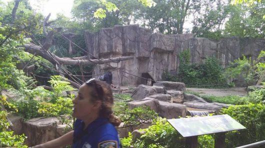 Cincinnati, USA - Zabito 17-letniego goryla zagrożonego wyginięciem -2a