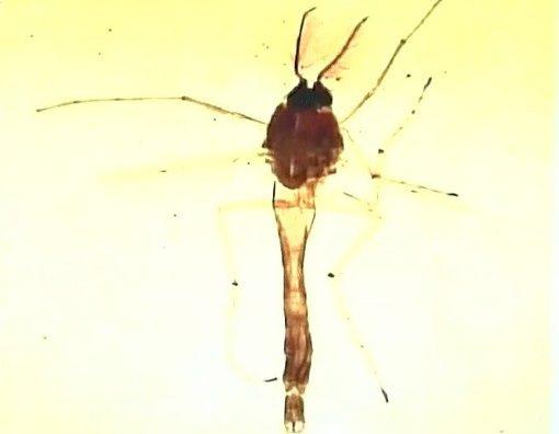 Indie - Podobne do komarów owady pokrywają marmury Tadż Mahal zielono-czarną wydzieliną 2